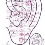 耳のつぼ画像
