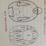 腹診と全身の縮図