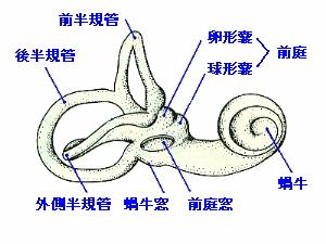 内耳の構造